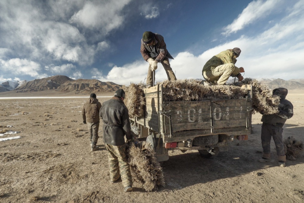 Collecting shrubs in the Murghab region. © Martin Saxer, 2018