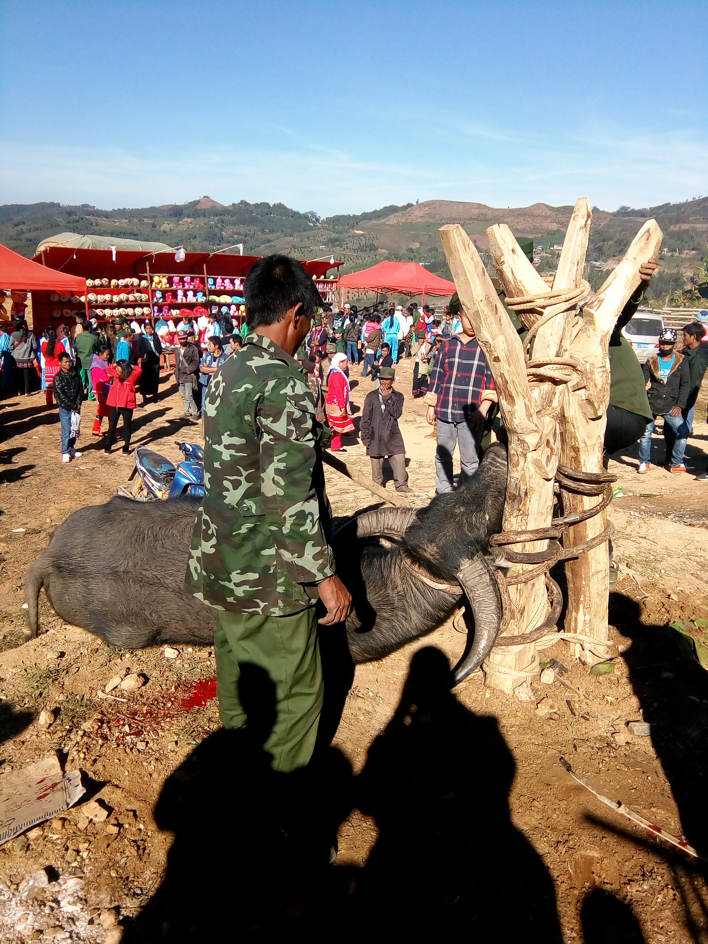 Buffalo Sacrifice during the opening of the new market. Kawn Mau, Wa State, Myanmar. Photo: Hans Steinmüller, 2017